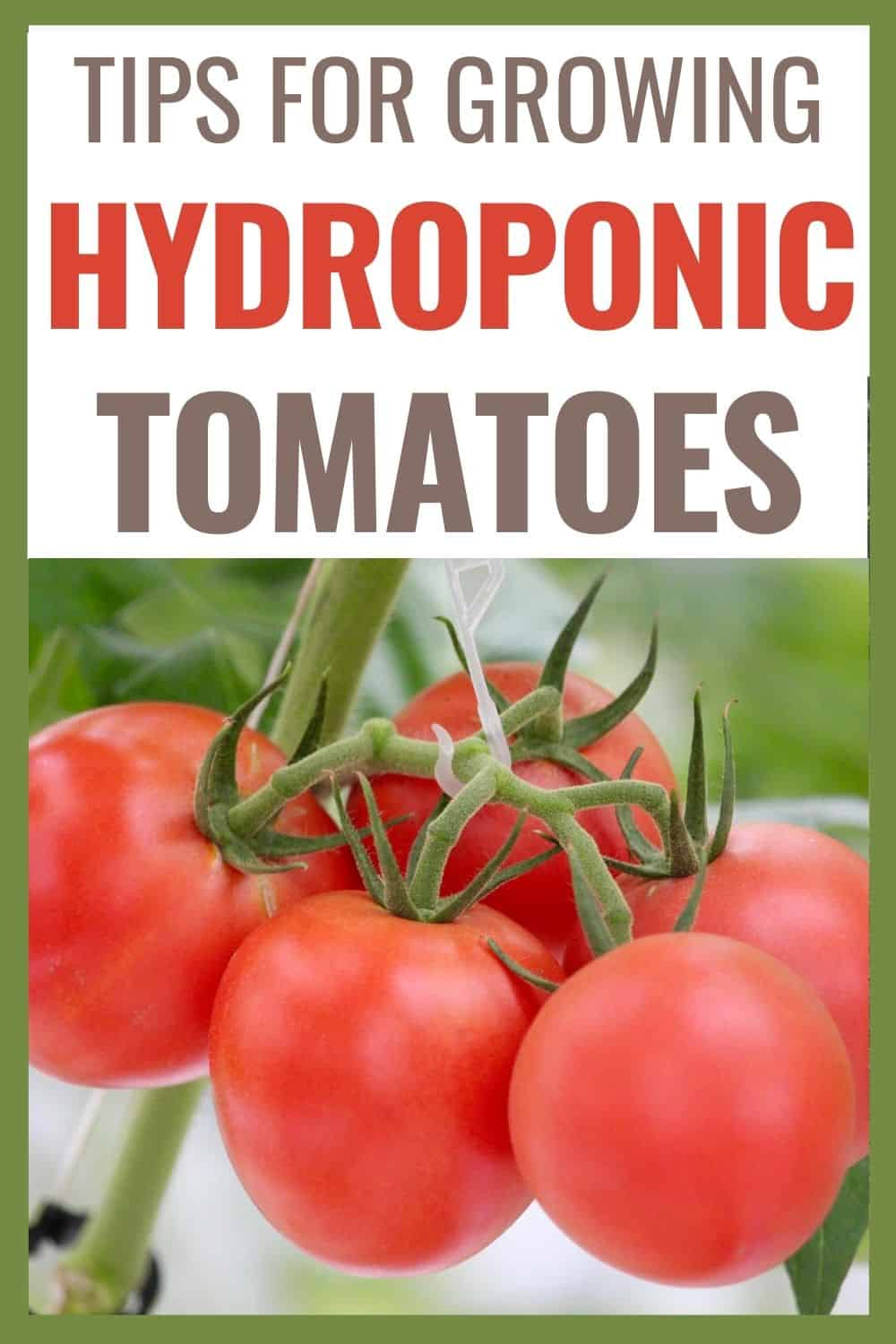 Tips for growing hydroponic tomatoes