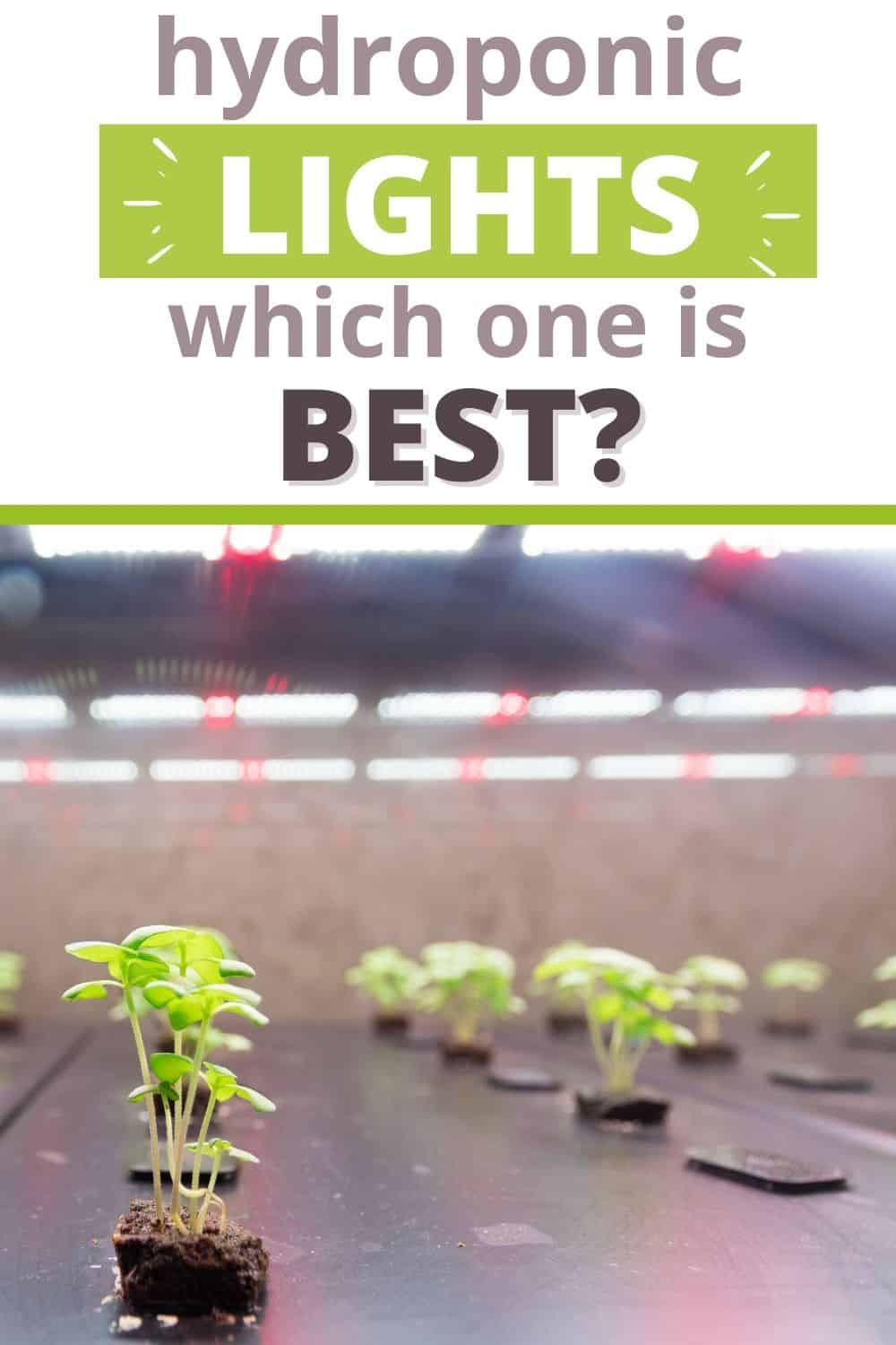 Which hydroponic lights are best?