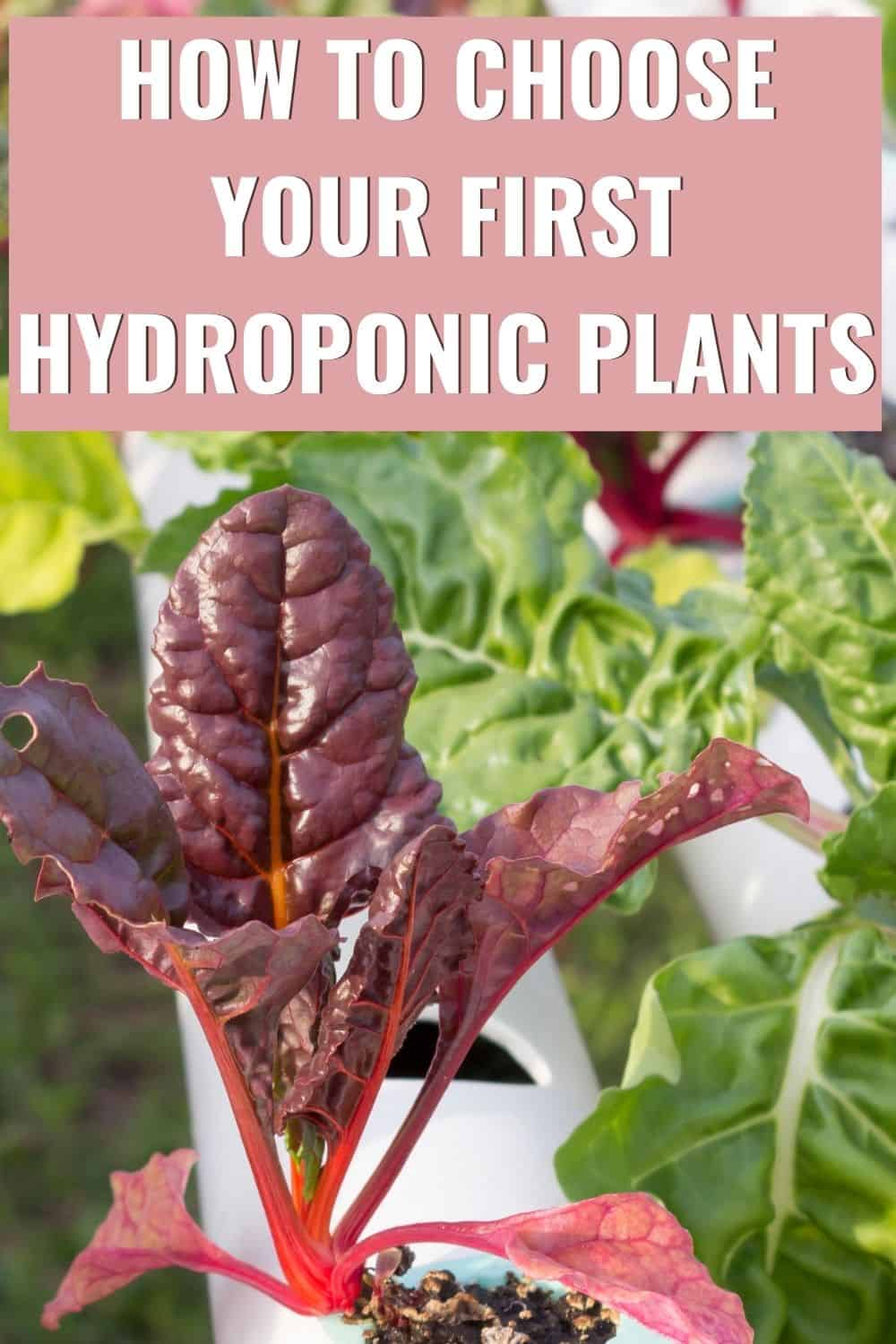 How to choose your first hydroponic plants?