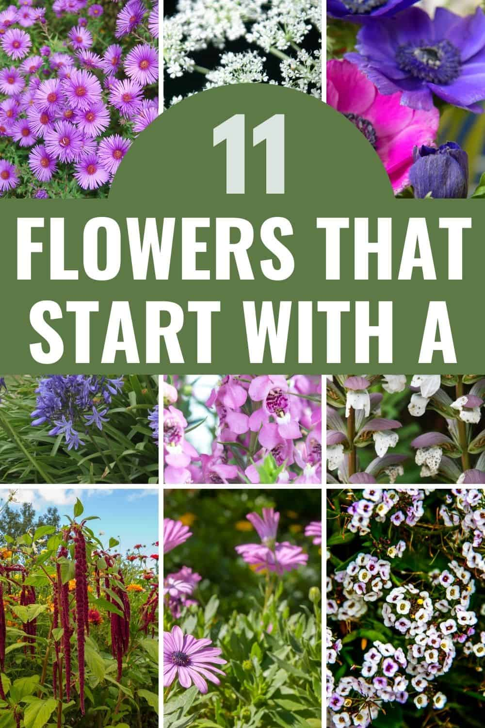 11 flowers that start with A