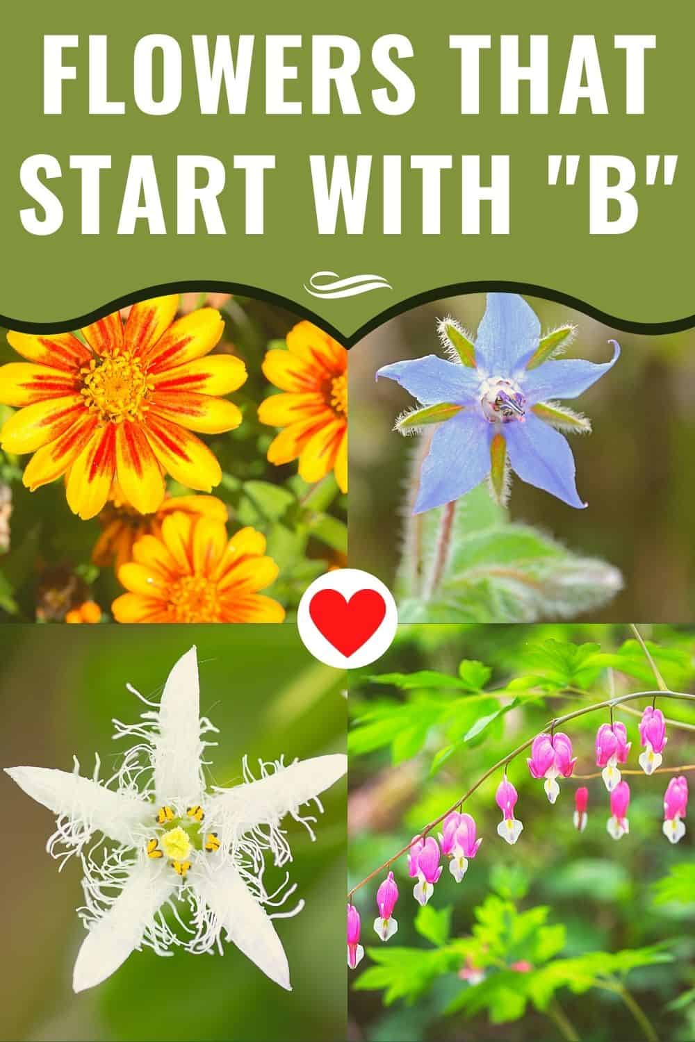flowers that start with b