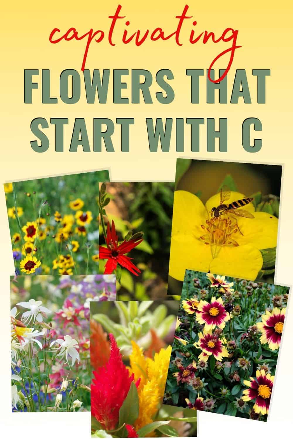 flowers that start with c