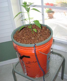 Mini bucket bubbler