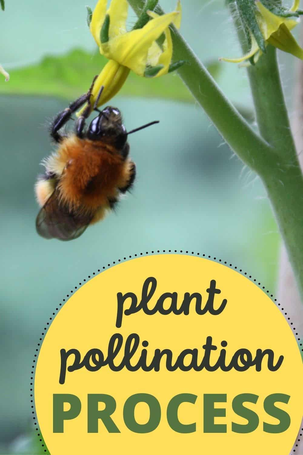 Plant pollination process in the hydroponic garden