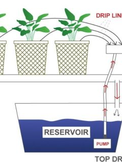 top drip hydroponic system diagram