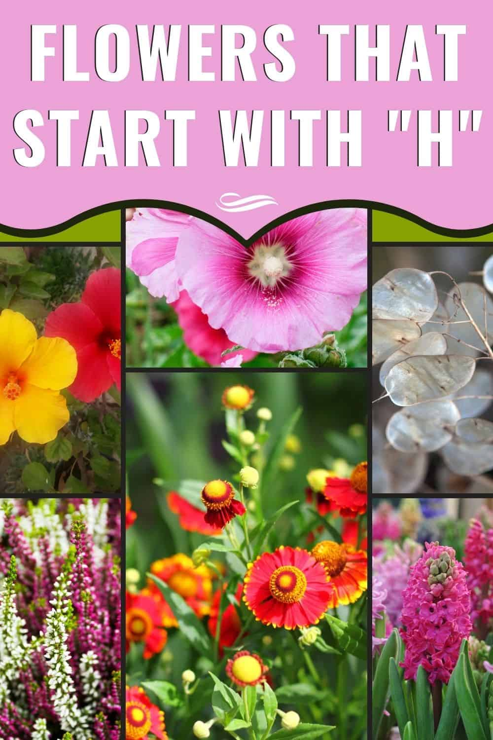 Flowers that start with H