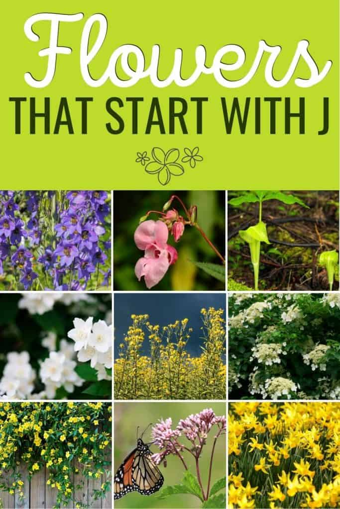 Flowers that start with J