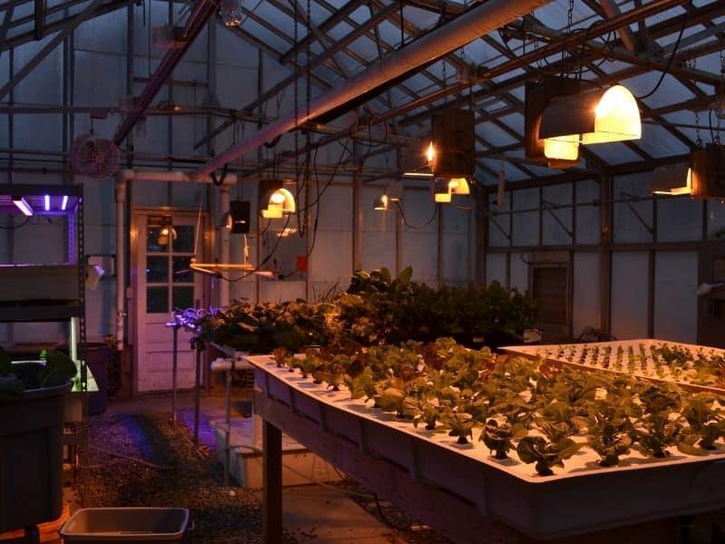 hydroponic garden lights