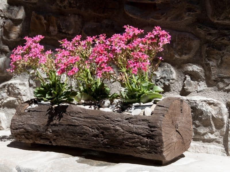 a wooden used as a planter with pink flowers