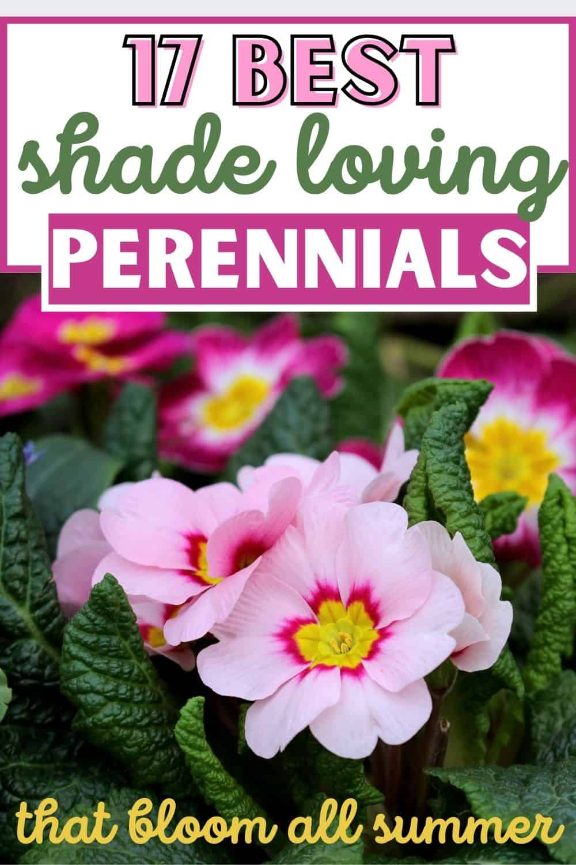 17 Best shade loving perennials that bloom all summer.