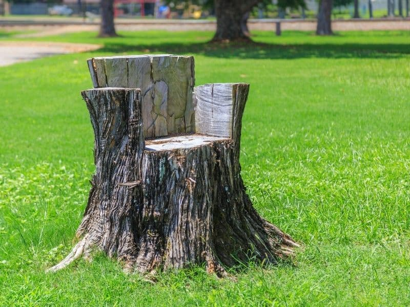 outdoor seating made from a tree stump