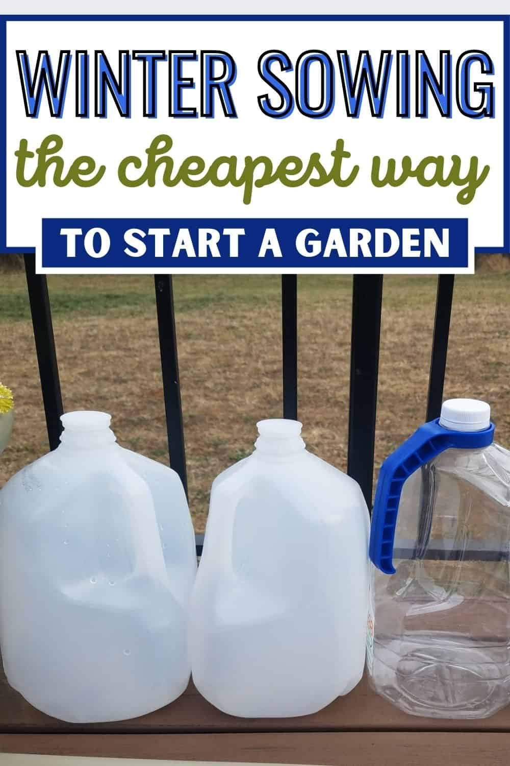 Winter sowing - the cheapest way to start a garden