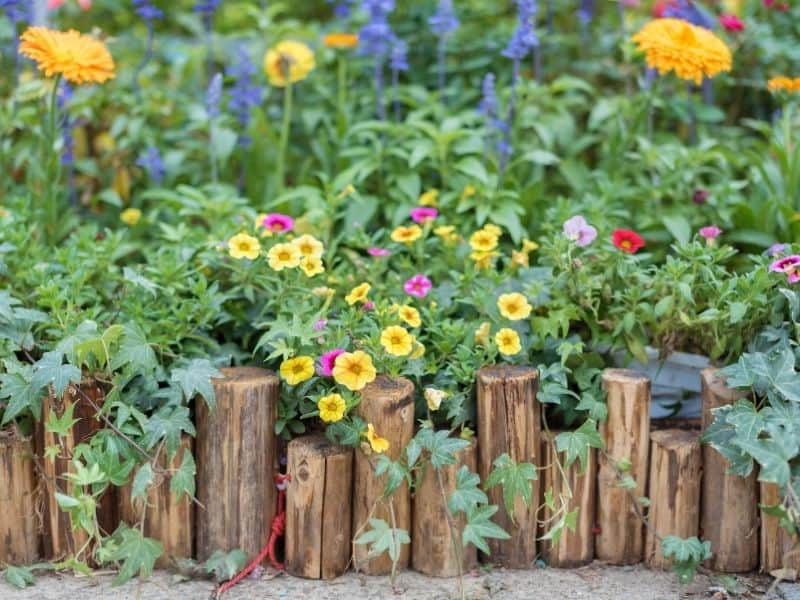 yellow and pink flowers behind wooden logs edging