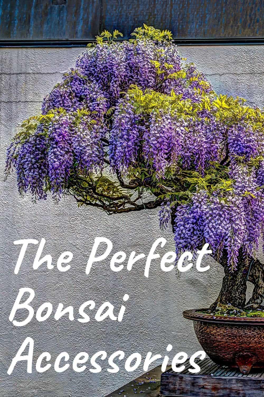 The perfect bonsai accessories
