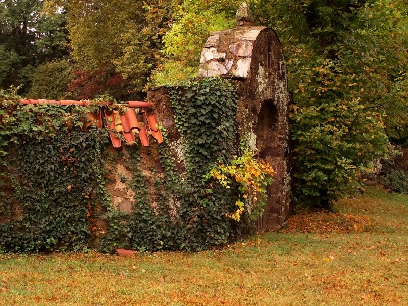 fence covered with english ivy