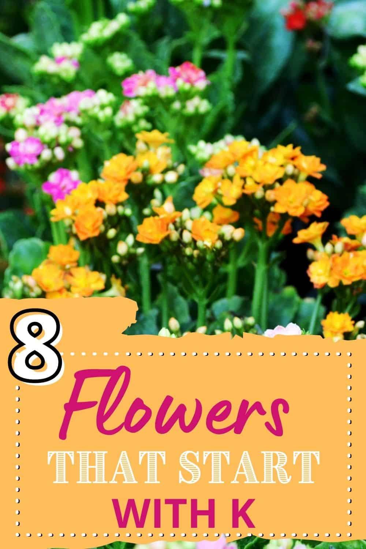 8 flowers thast start with k