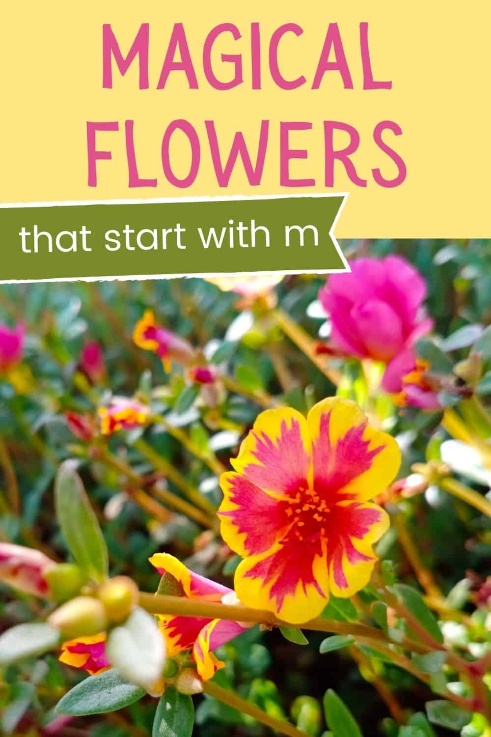 Flowers that start with m