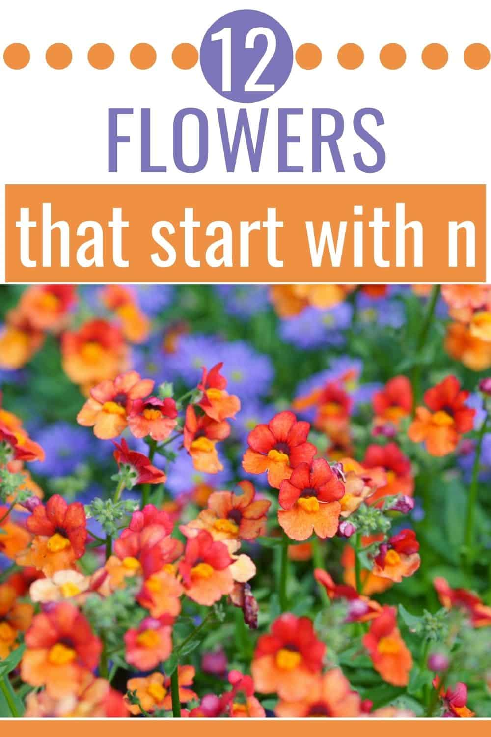 12 flowers that start with n