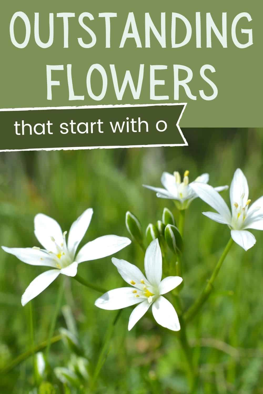 Outstanding flowers that start with O