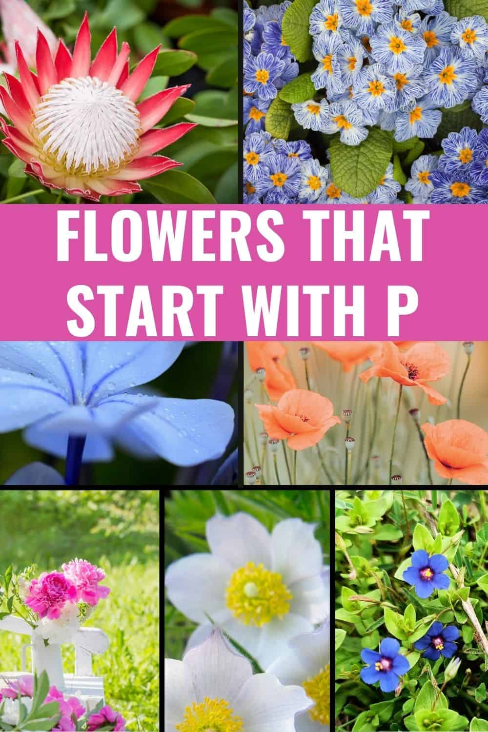 Flowers that start with p