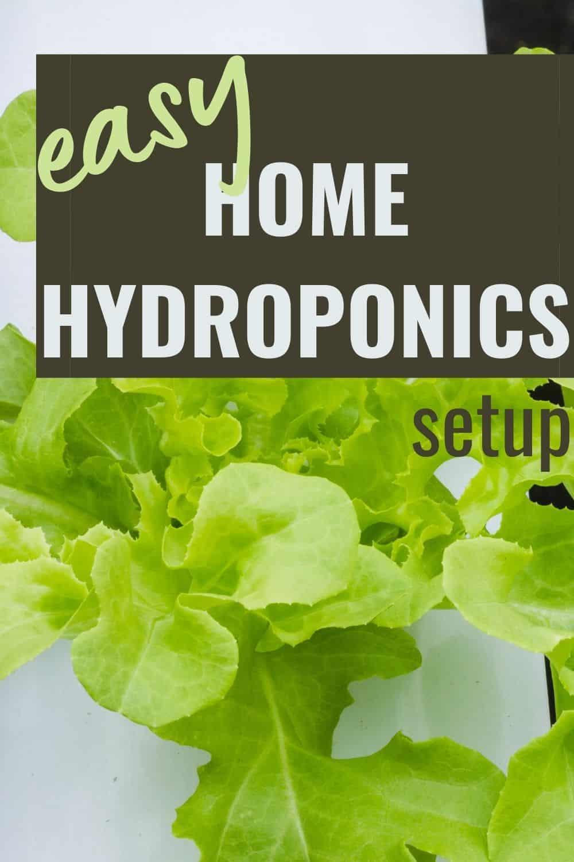 Easy home hydoponics setup