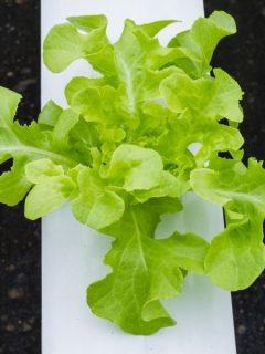 home hydroponics setup