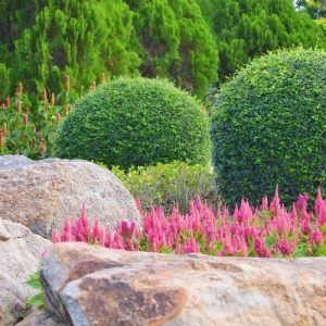 landscape wiht rocks, shrubs and spiky flwoers