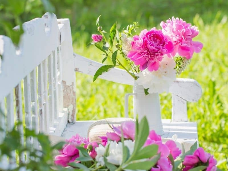 bright pink peonies and white bench