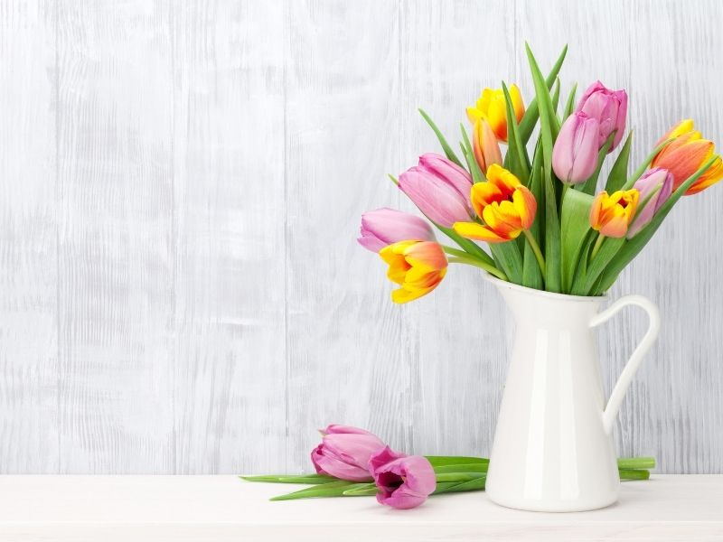 pink and yellow tulips in white pitcher