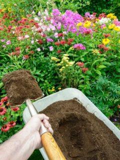 Adding compost to the flower garden