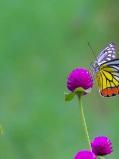 a butterfly on a hot pink flower