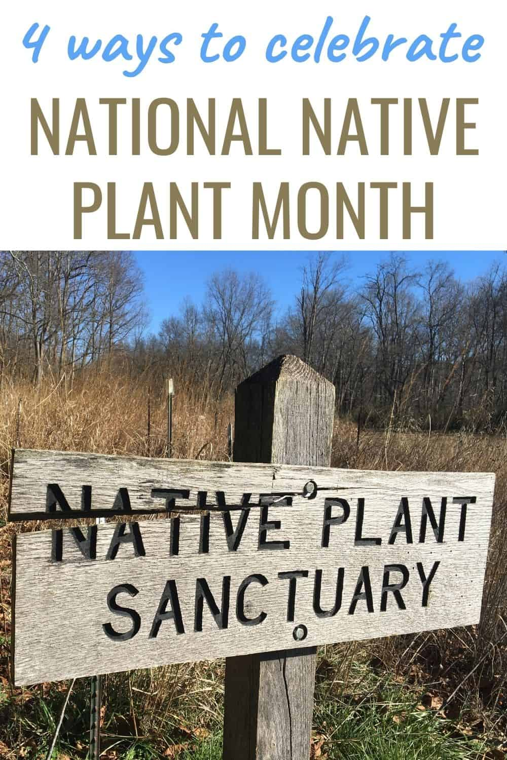 4 ways to celebrate National Native Plant Month