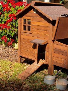 Beautiful wooden chicken coop