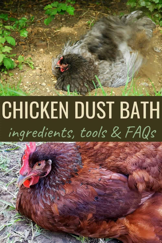Chicken dust bath: ingredients, tools & FAQs