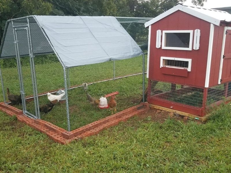 brand new chicken run