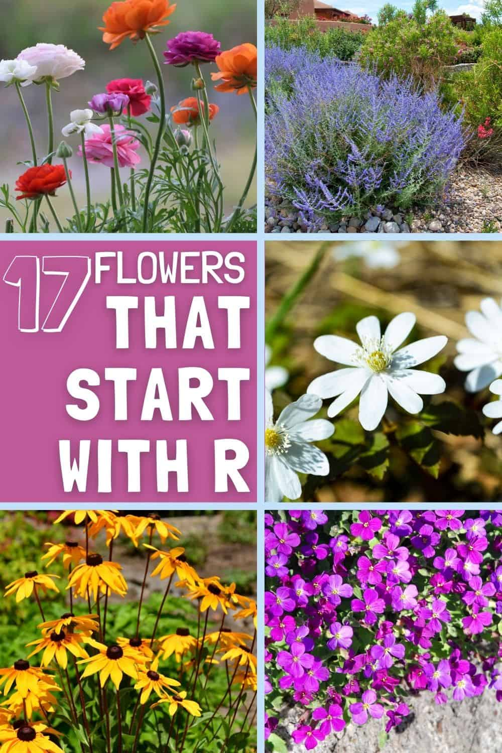 flowers that start with r
