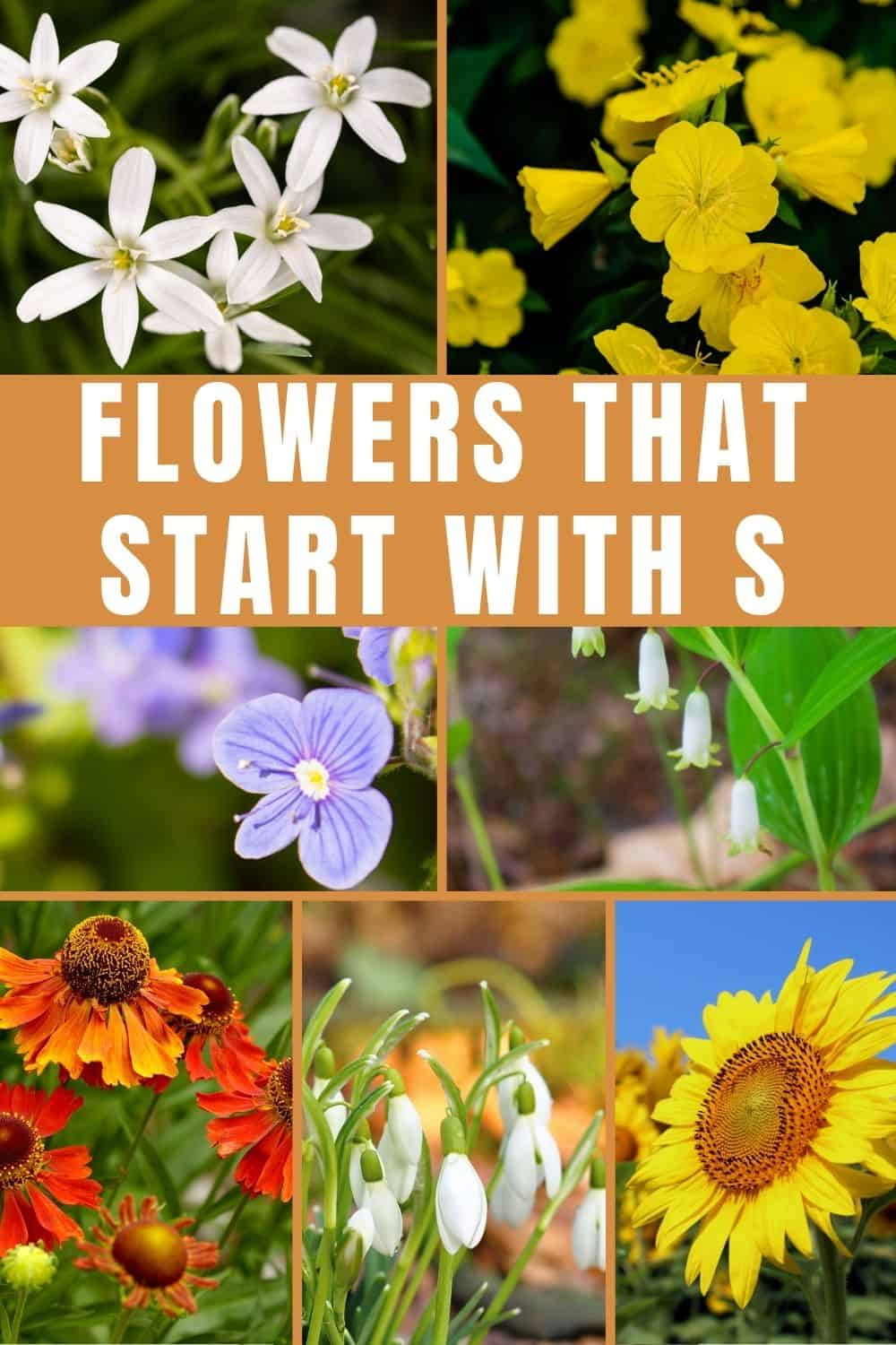 Flowers that start with S