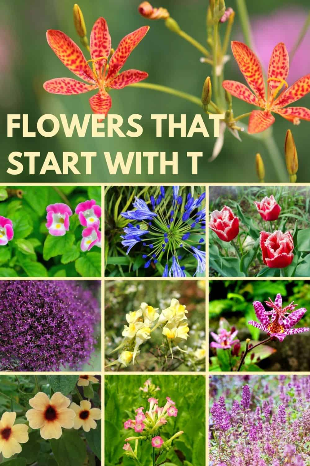 Flowers that start with t