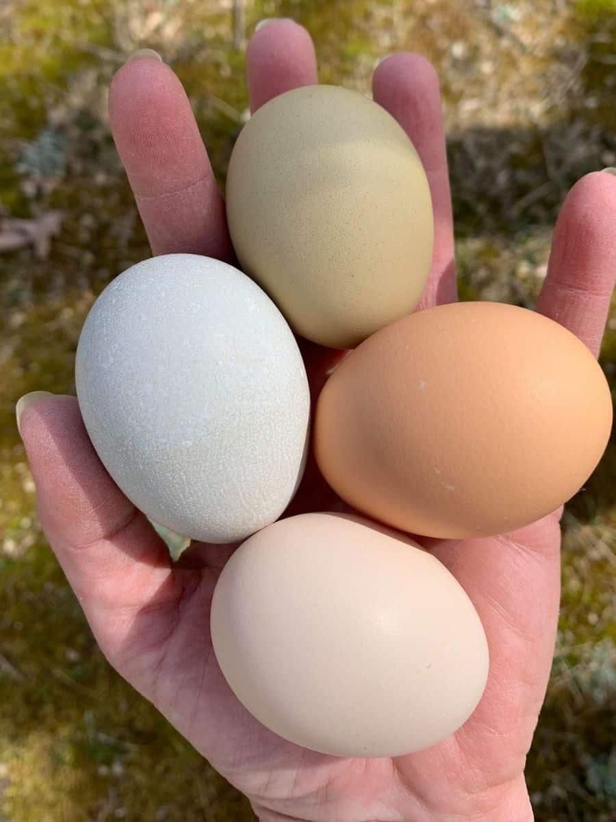 a handful of fresh eggs