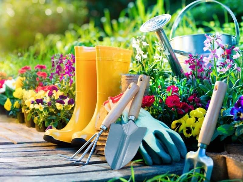 garden tools and plants ready for spring planting