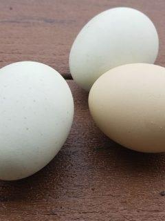 three green eggs on my porch