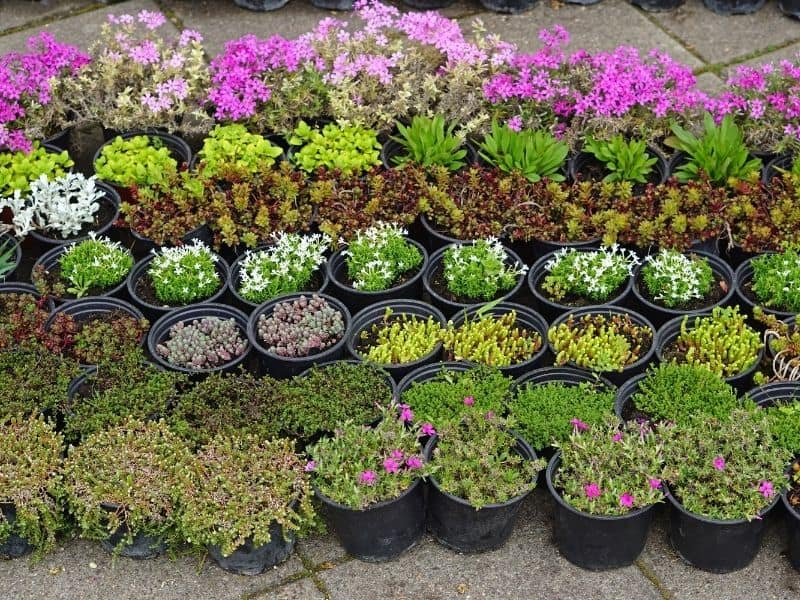 flower containers lined up at the nursery