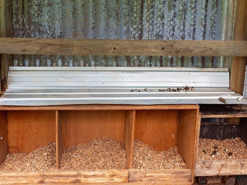metal poop board undere roosting bars