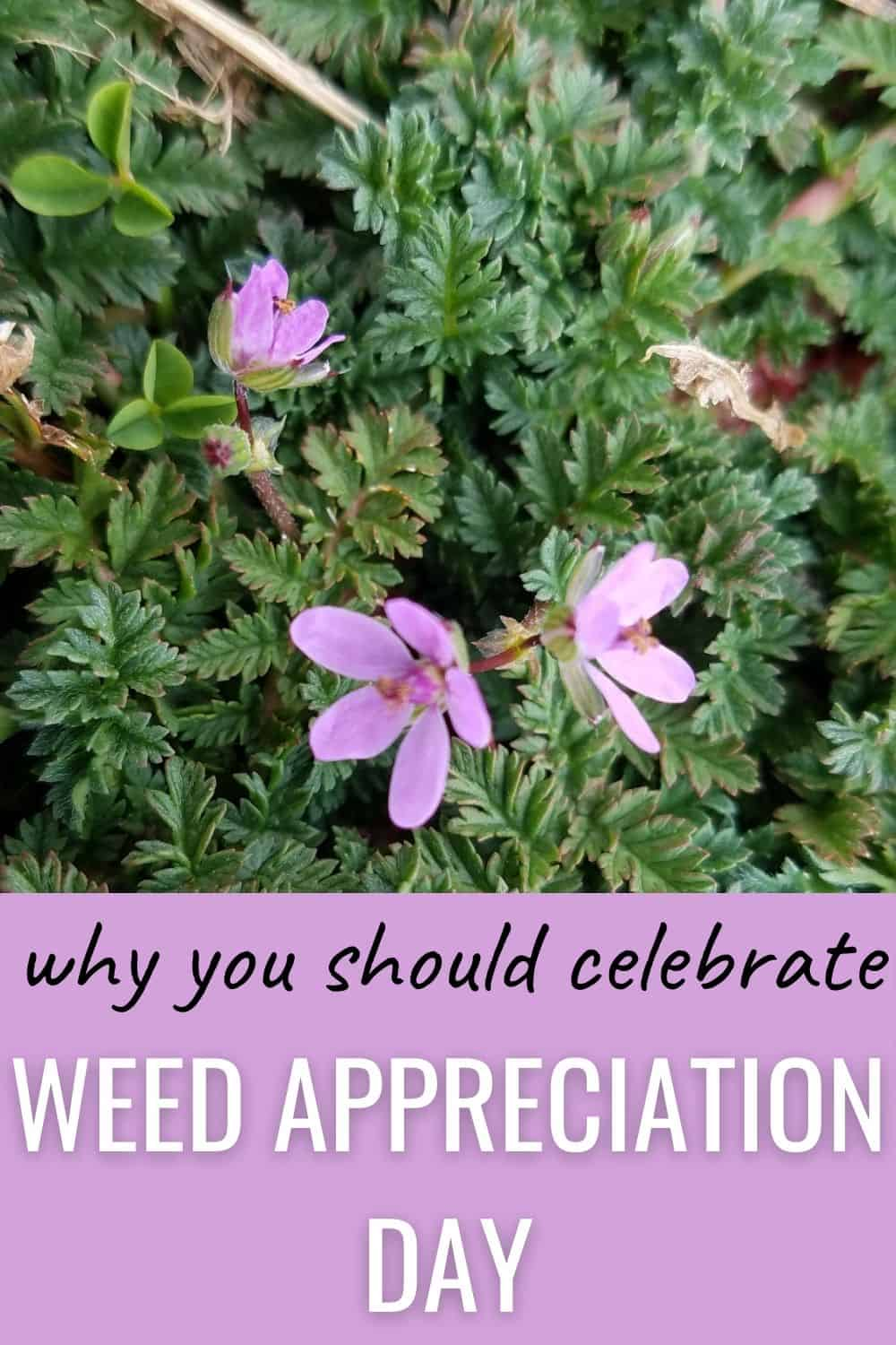 Why should you celebrate weed appreciation day?