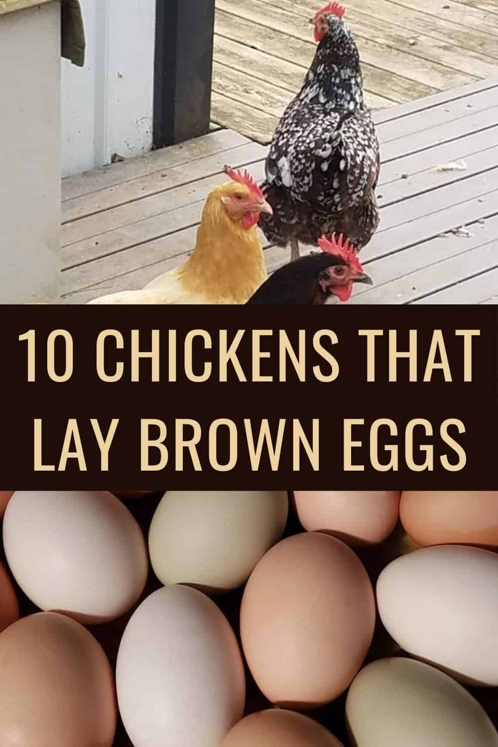10 chickens that lay brown eggs