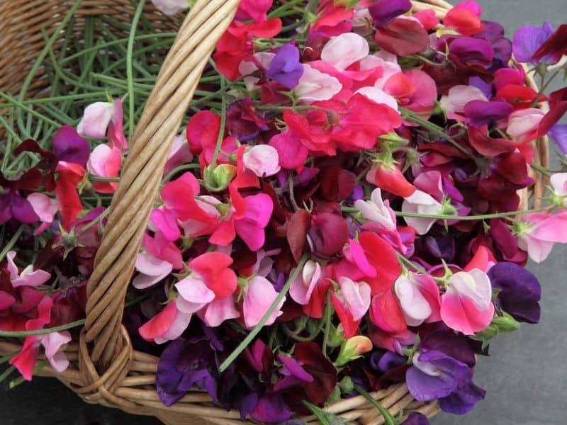 a basket full of sweet pea flowers