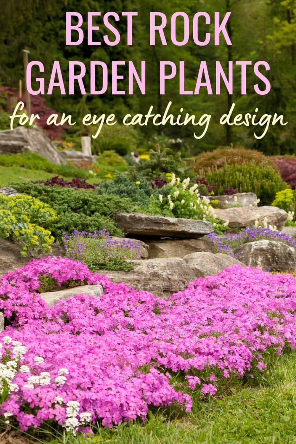 Best rock garden plants for an eye catching design