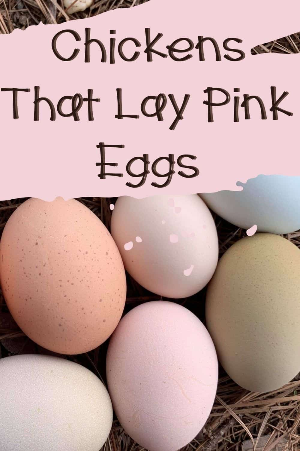 Chickens that lay pink eggs