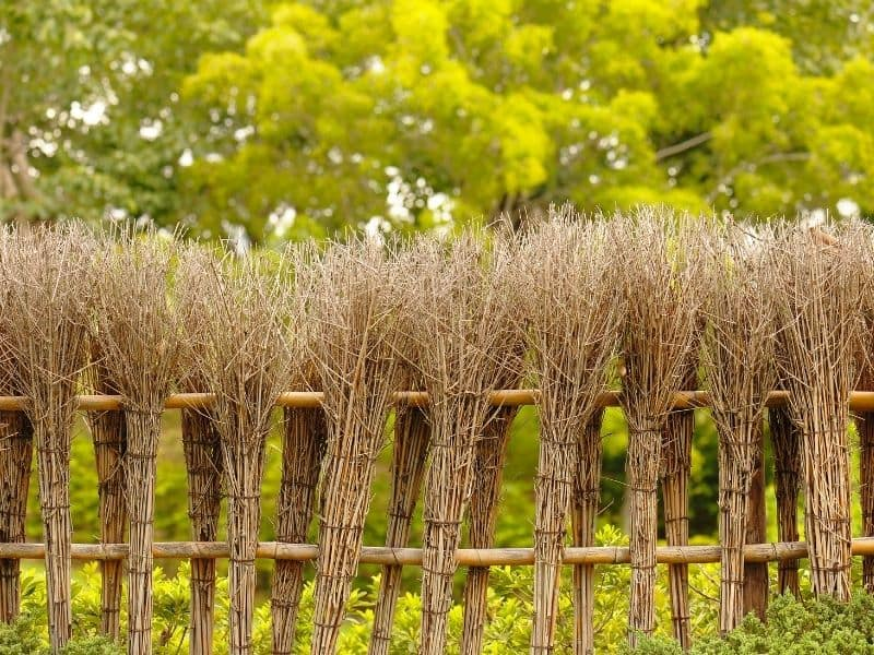dried brush fence