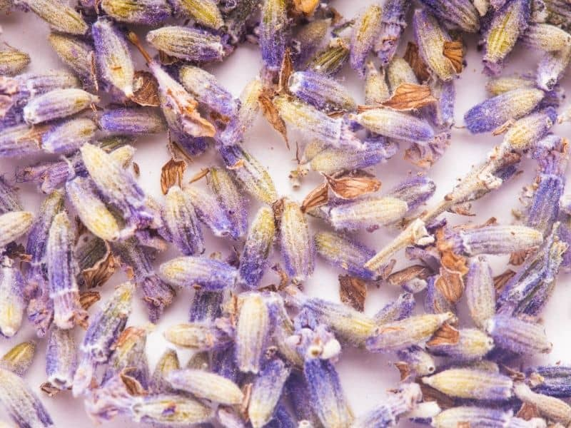 dry lavender buds